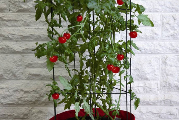 Climbing-Tomato-Patio-Planter
