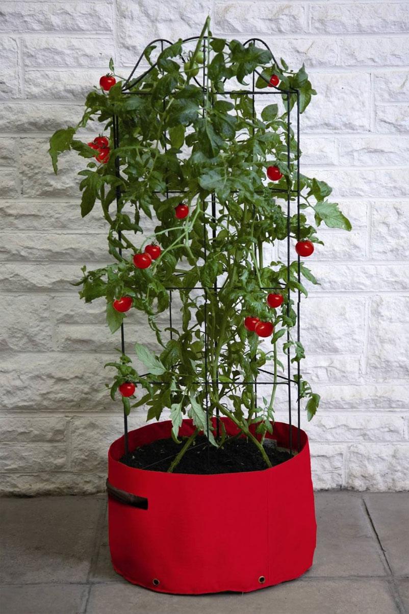 Climbing-Tomato-Patio-Planter