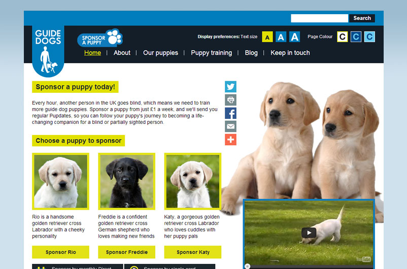 The Lowdown On Guide Dogs Sponsor A Puppy Real Gifts